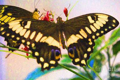 Photograph - Eastern Black Swallowtail by Steven Parker