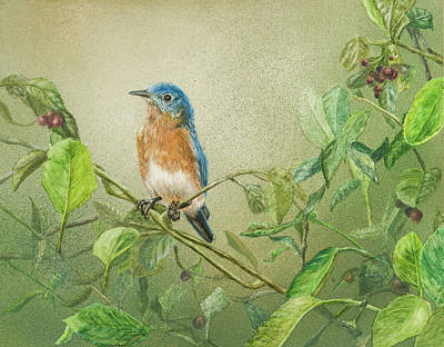 Painting - Eastern Blue Bird by Carol Hanna