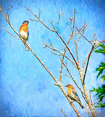 Photograph - Eastern Bluebird Couple by Kerri Farley