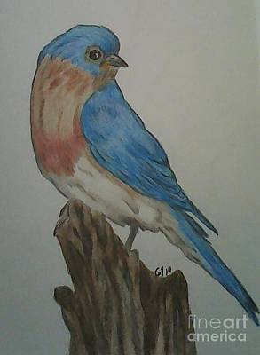 Drawing - Eastern Bluebird by Ginny Youngblood