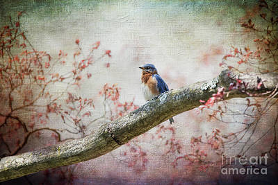 Photograph - Eastern Bluebird by Judy Wolinsky