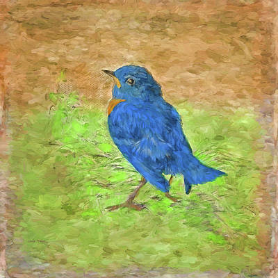 Photograph - Eastern Bluebird Painting by Sandi OReilly