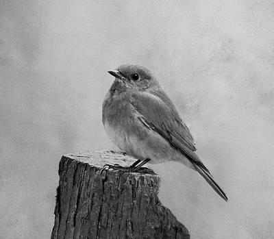 Photograph - Eastern Bluebird by Sandy Keeton