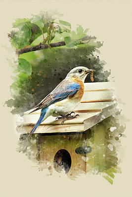 Bluebird Mixed Media - Eastern Bluebird Watercolor Art by Christina Rollo