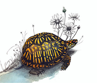 Drawing - Eastern Box Turtle by Katherine Miller
