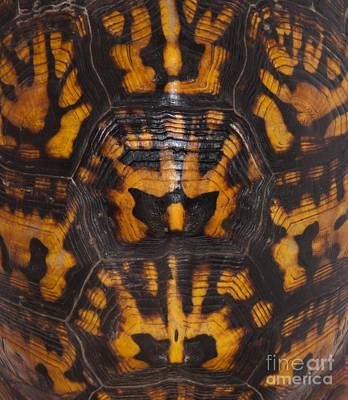 Box Turtle Photograph - Eastern Box Turtle, Shell Pattern by Scott Camazine
