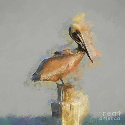 Photograph - Eastern Brown Pelican by Scott Cameron