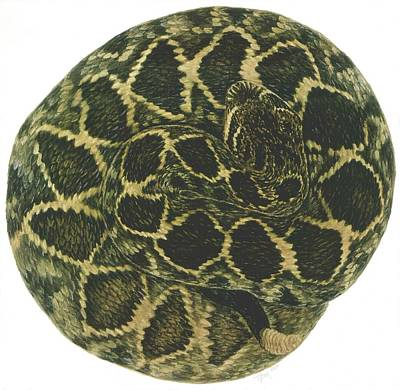 Eastern Diamondback Rattlesnake Original