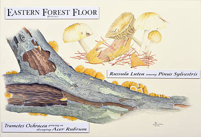 Drawing - Eastern Forest Floor Plate 1 by Sam Davis Johnson