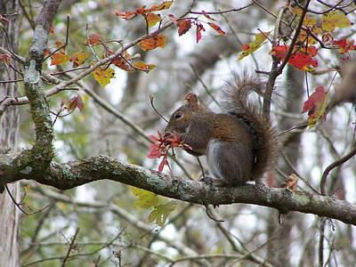 Photograph - Eastern Gray Squirrel - Sciurus Carolinensis by rd Erickson