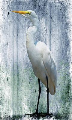 Photograph - Eastern Great Egret Ardea Alba Modesta by David Dehner