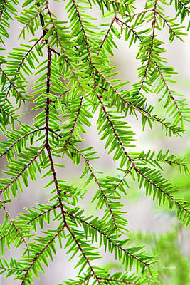 Print featuring the photograph Eastern Hemlock Tree Abstract by Christina Rollo