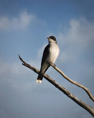 Photograph - Eastern Kingbird by Lana Trussell