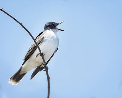 Photograph - Eastern Kingbird - Singing For You by Debra Martz