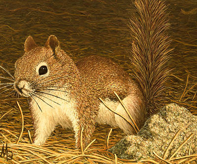 Painting - Eastern Pine Squirrel by Marc Dmytryshyn