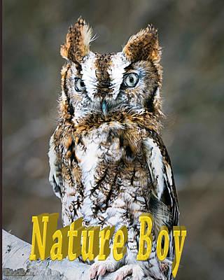 Birds Photograph - Eastern Screech Owl Nature Boy by LeeAnn McLaneGoetz McLaneGoetzStudioLLCcom
