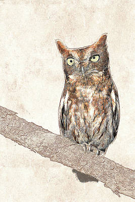 Photograph - Eastern Screech Owl Photographic Drawing by Dawn Currie
