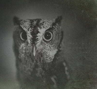 Photograph - Eastern Screech Owl by Shane Holsclaw