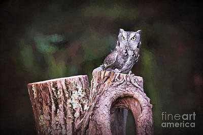 Photograph - Eastern Screech Owl by Sharon McConnell
