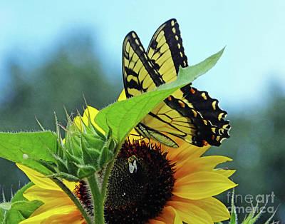 Photograph - Eastern Tiger Swallowtail 10 by Lizi Beard-Ward