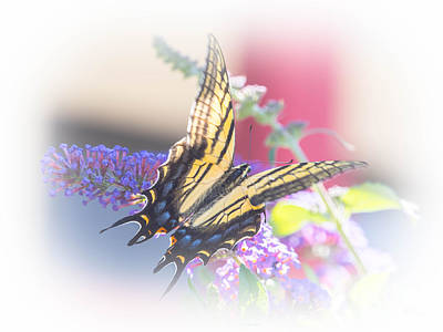 Photograph - Eastern Tiger Swallowtail 2 by Ronald Grogan