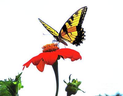 Photograph - Eastern Tiger Swallowtail 28 by Lizi Beard-Ward