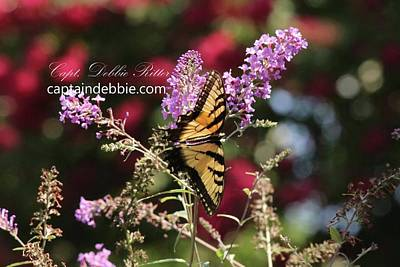 Photograph - Eastern Tiger Swallowtail Papilio Glaucus8834 by Captain Debbie Ritter