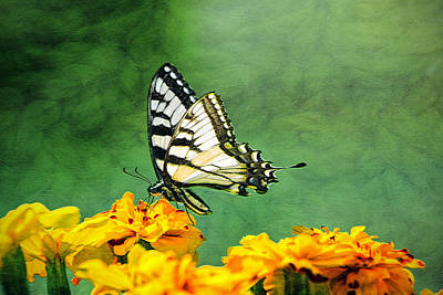 Photograph - Eastern Tiger Swallowtail by Marion Johnson