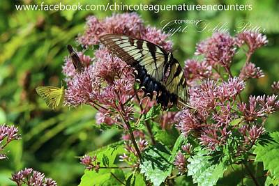 Photograph - Eastern Tiger Swallowtail Papilio Glaucus Female by Captain Debbie Ritter