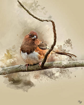 Digital Art - Bird Art - Eastern Towhee - Female by Ron Grafe