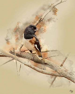 Digital Art - Bird Art - Eastern Towhee - Male by Ron Grafe