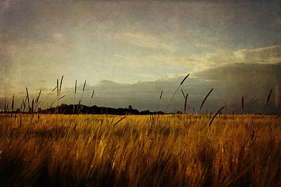 Art Print featuring the photograph Eastern Wheat by Gary Smith