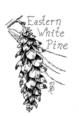 Eastern White Pine Cone On A Branch Art Print