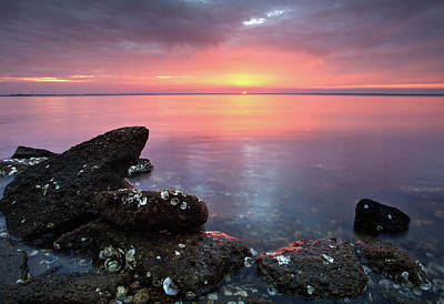 Photograph - Eastpoint Sunset by Eilish Palmer
