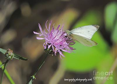 Photograph - Easy Breezy Butterfly by Tami Quigley