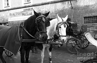 Photograph - Ebony And Ivory In Salzburg by John Rizzuto