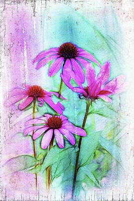 Echinacea Digital Art - Echinacea - A05cc by Variance Collections