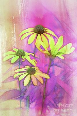 Digital Art - Echinacea - A12t3c9 by Variance Collections