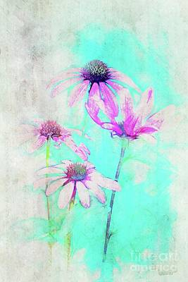 Daisies Digital Art - Echinacea - A21t25 by Variance Collections