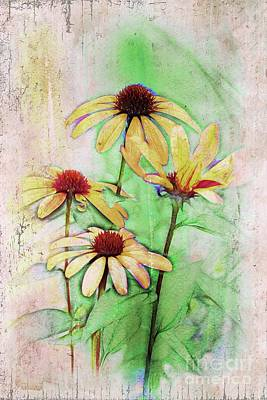Digital Art - Echinacea - A56 by Variance Collections