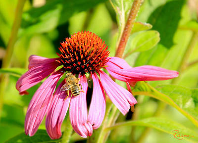 Photograph - Echinacea Bee by Rasma Bertz