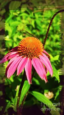 Photograph - Echinacea Cone Flower N1177 by Ella Kaye Dickey