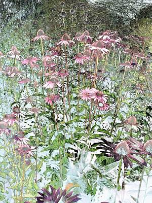 Photograph - Echinacea by Dorothy Berry-Lound
