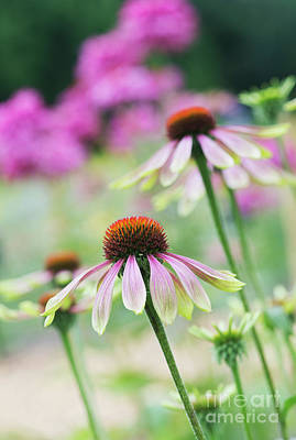 Photograph - Echinacea Green Envy by Tim Gainey
