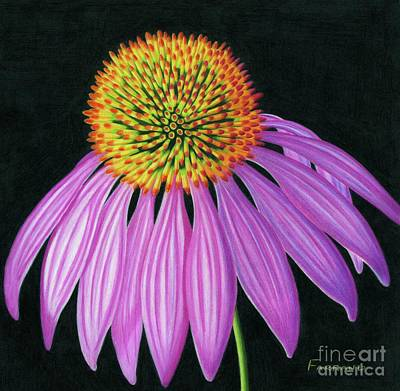 Wall Art - Painting - Echinacea I by Tracy Farrand