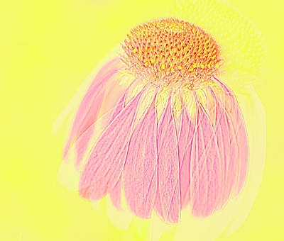Art Print featuring the photograph Echinacea In Pink by Linde Townsend