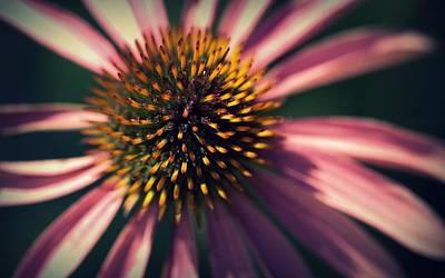 Photograph - Echinacea by Joseph Skompski