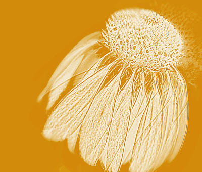 Abstracted Coneflowers Photograph - Echinacea by Linde Townsend