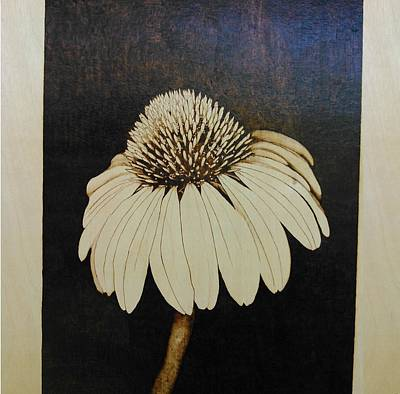 Pyrography On Wood Pyrography - Echinacea by Marsha Wilson