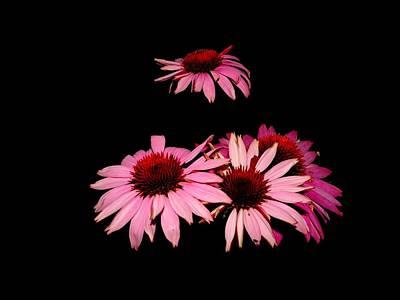 Photograph - Echinacea Pop by Susan Baker